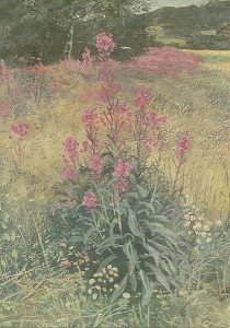 Willow herb by Arne Paus
