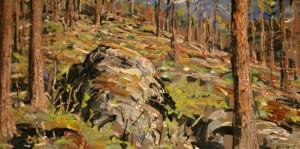 Skogen er mitt hjem av Arne Paus